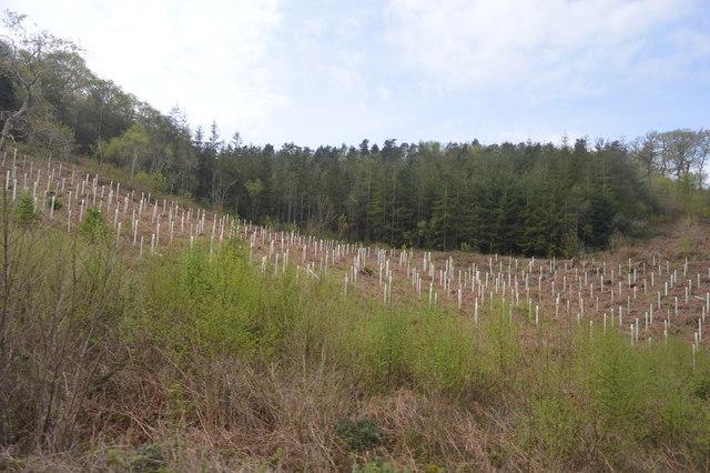 Largin woods 2