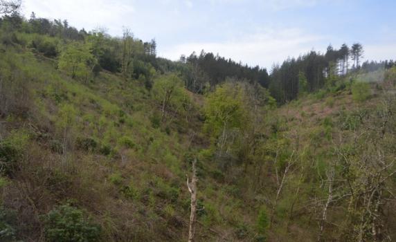 Largin woods